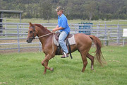 brown good and fast horse for sale